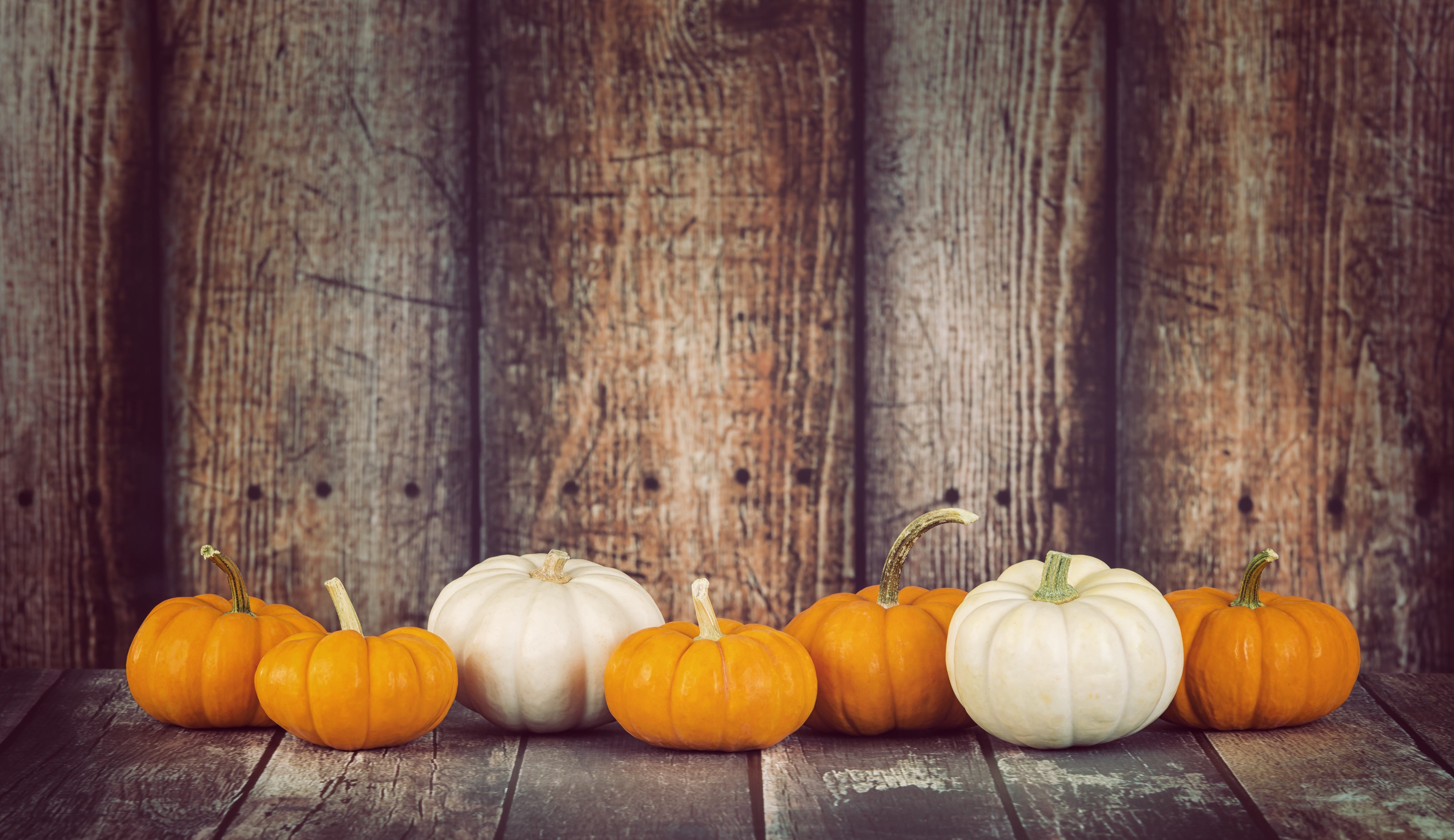 Mini pumpkins in a row against rustic wooden background, copy space